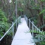 Bosque de Pterocarpus en Palmas del Mar tendrá su propia torre de avistamiento de aves
