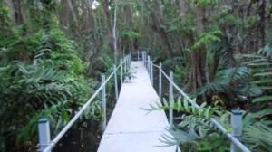 (El Bosque de Pterocarpus sirve de espacio recreacional)