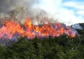 incendio forestal naguabo